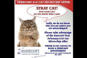 Microchip Your Cats for £10 During February!