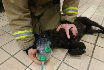 Specialist pet resuscitation kits now being used in Wiltshire