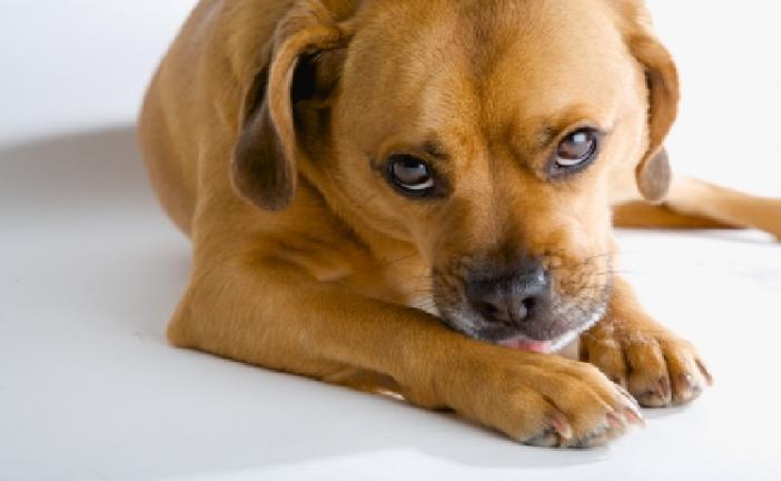 Warning Issued Regarding Dried Jerky Treats for Dogs