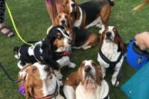 Lydiard Bark Charity Fun Dog Show Sunday 2nd July 2017