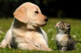 Tips to staying safe when purchasing pets
