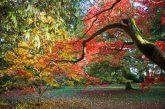 Conversations with Trees at Westonbirt Arboretum